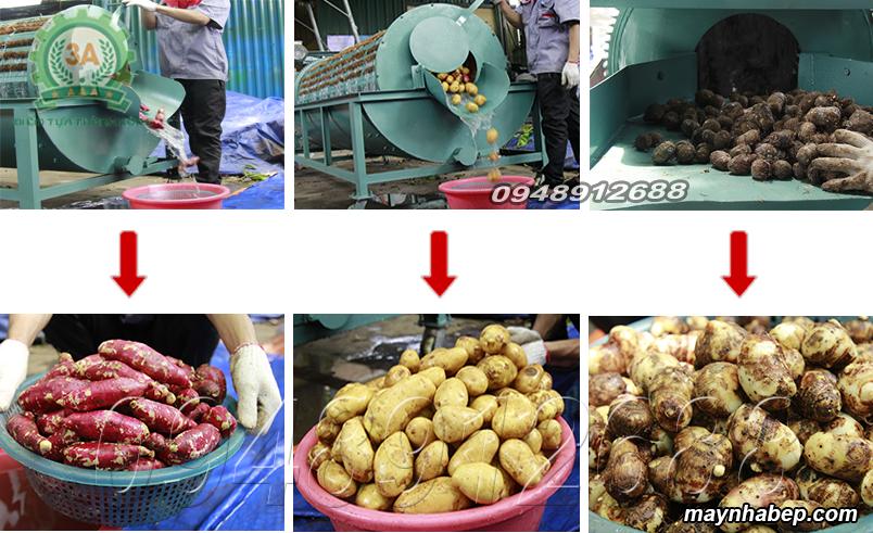 Nông sản được rửa bằng Máy rửa củ quả bằng sơ dừa 3A3KW