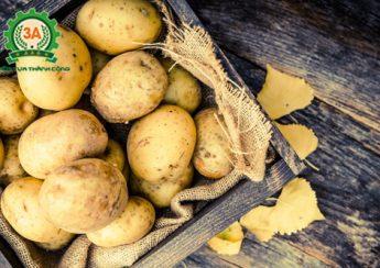 Lợi ích của khoai tây, tác dụng của khoai tây, khoai tây
